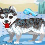 My Cute Dog Bathing