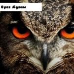 Owl Eyes Jigsaw